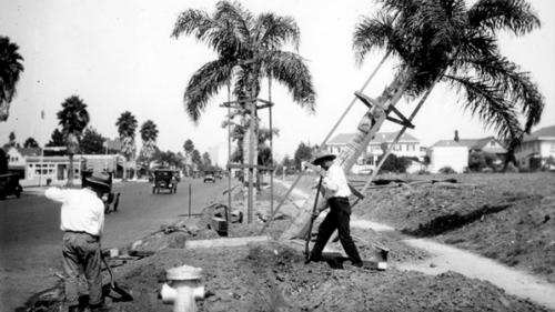 Planting-wilshire-lapl-1926